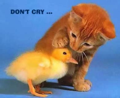 http://www.nifty-stuff.com/chickens/uploads/images/Kitsune/Cute/don_t_cry.JPG